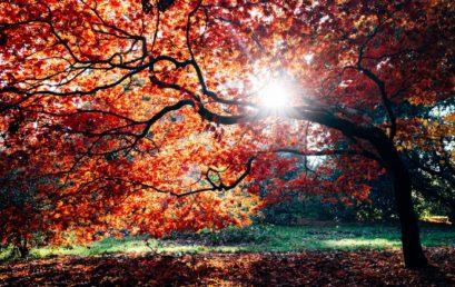 Schöne Herbstferien!